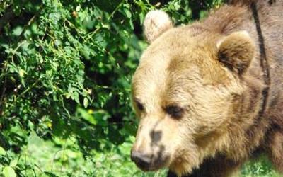 Bärenbeobachtung – 1 Tag