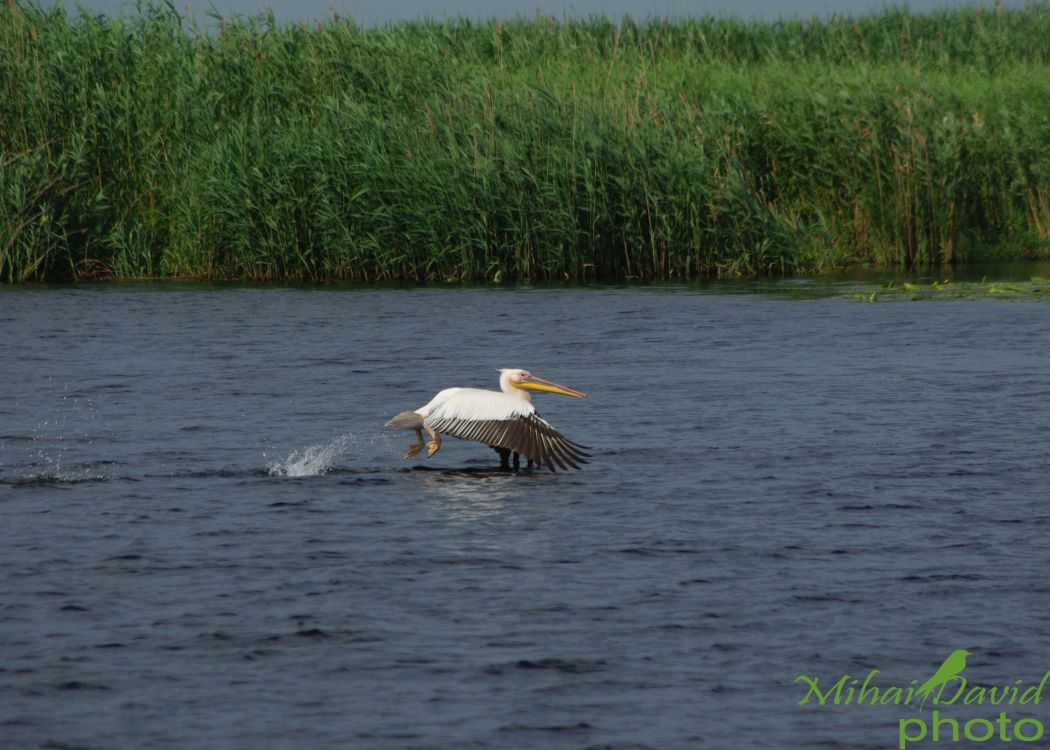 romanian-tours-danube-delta-wildlife-12
