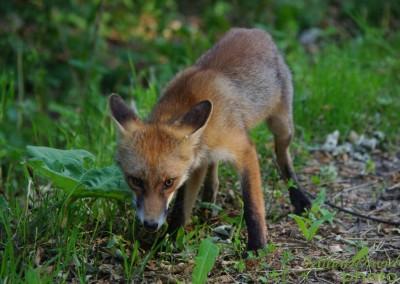 romanian-wildlife-tours-carpathians-danube-delta-transylvania-dobrogea-18