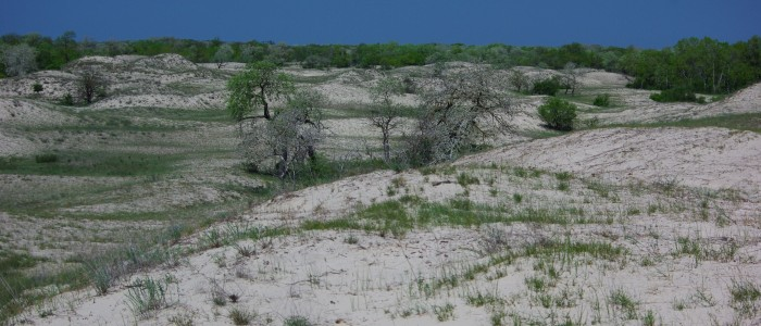 sand-dunes-virgin-forest-letea-guided-tours