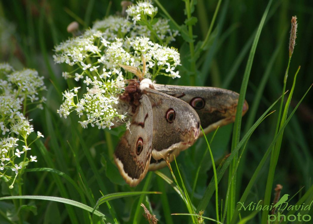 romanian-wildlife-tours-carpathians-danube-delta-transylvania-dobrogea-165