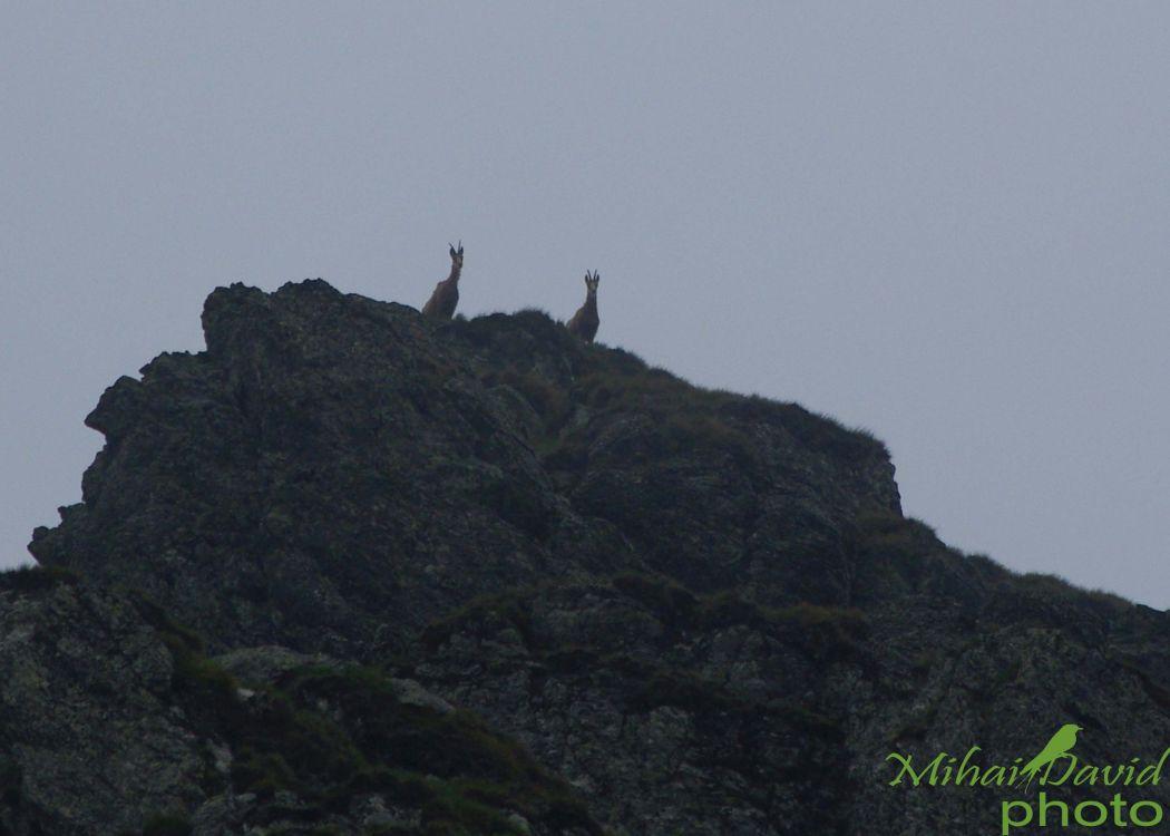 romanian-wildlife-tours-carpathians-danube-delta-transylvania-dobrogea-12