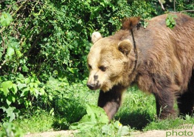 romanian-wildlife-tours-carpathians-danube-delta-transylvania-dobrogea-9