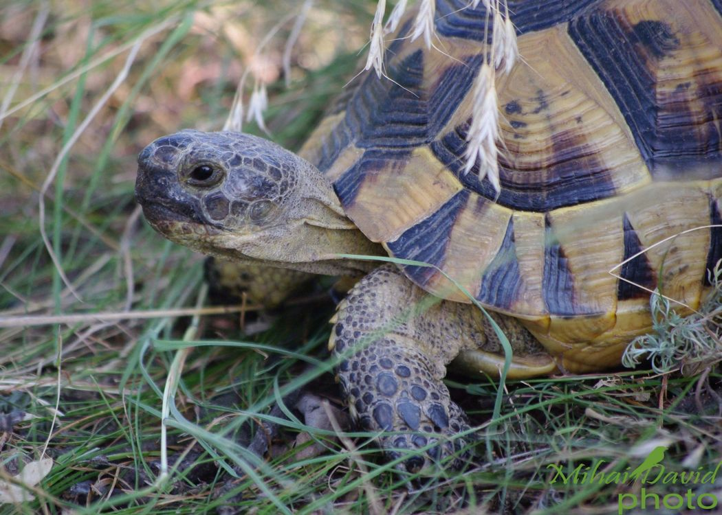 romanian-wildlife-tours-carpathians-danube-delta-transylvania-dobrogea-8