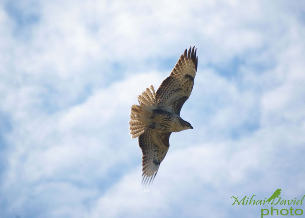 romania-birdwatching-tours-danube-delta-carpathians-transylvania-8