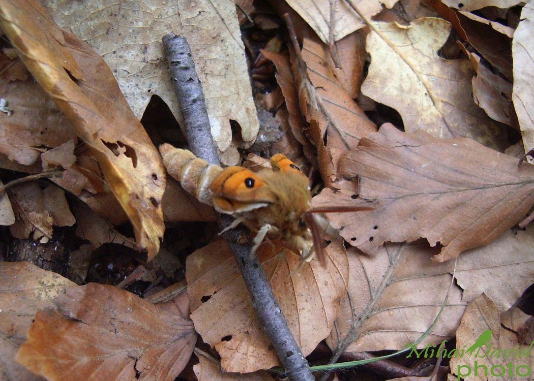 romanian-wildlife-tours-carpathians-danube-delta-transylvania-dobrogea-5