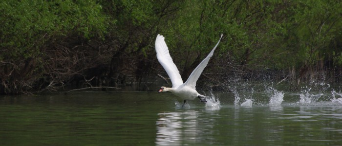 birdwatching-danube-delta-tour