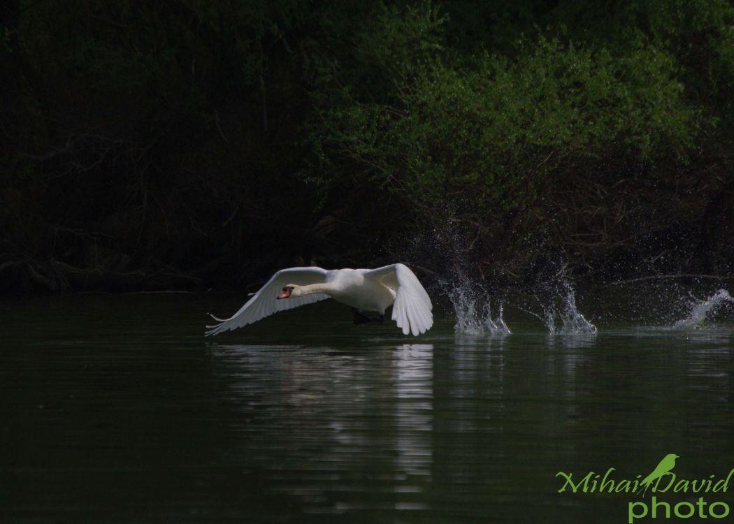 romania-birdwatching-tours-danube-delta-carpathians-transylvania-3