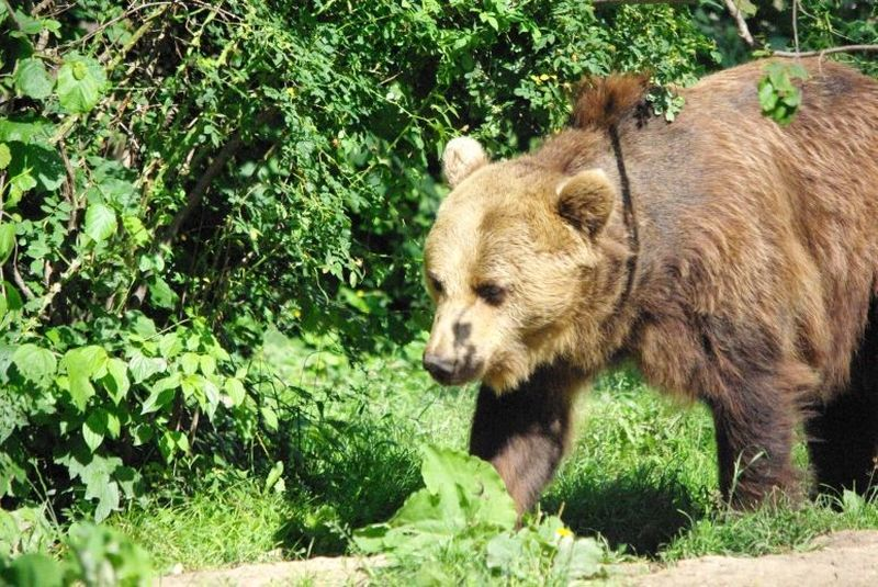 bearwatching-guided-tours