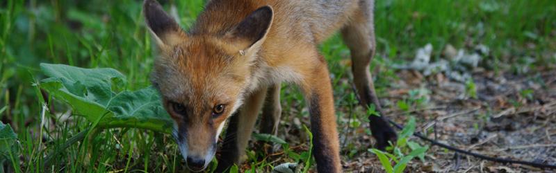 Wildlife in den Karpaten – 4 Tage Tour