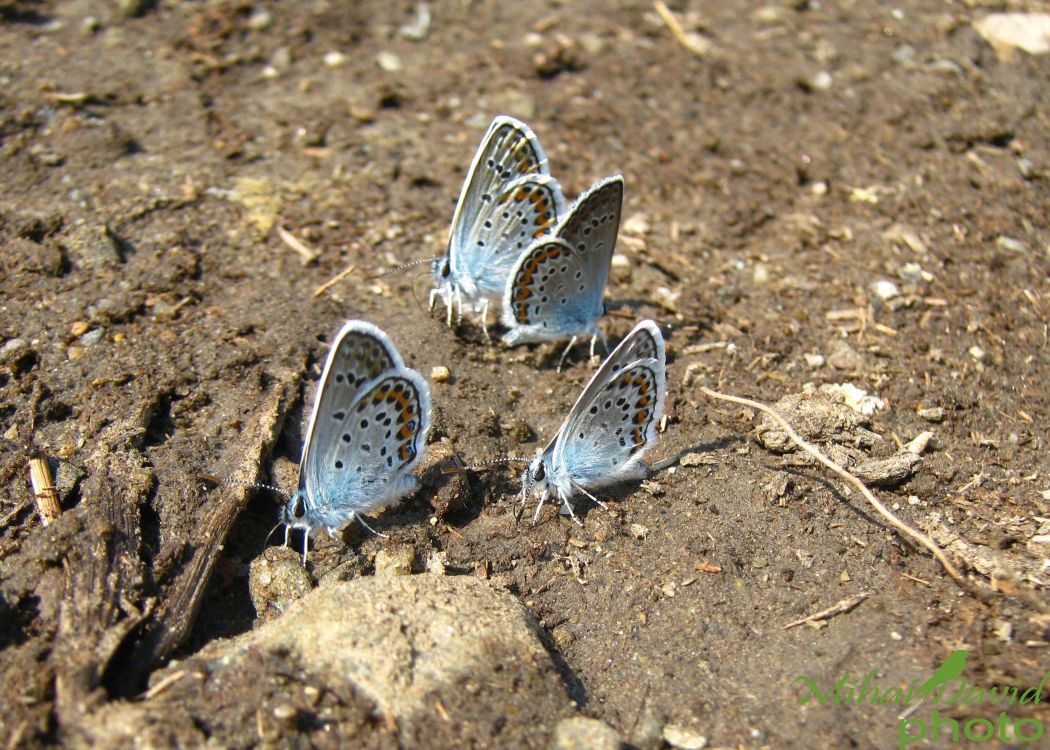 romanian-wildlife-tours-carpathians-danube-delta-transylvania-dobrogea