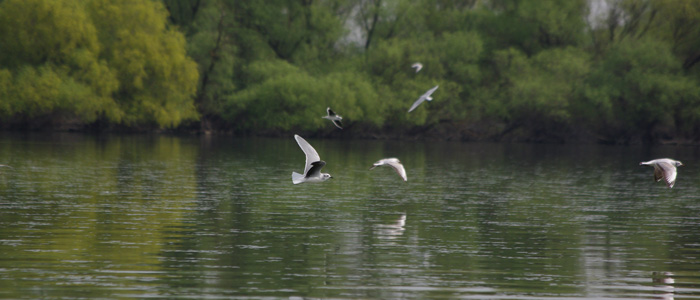 birdwatching-tour-danube-delta