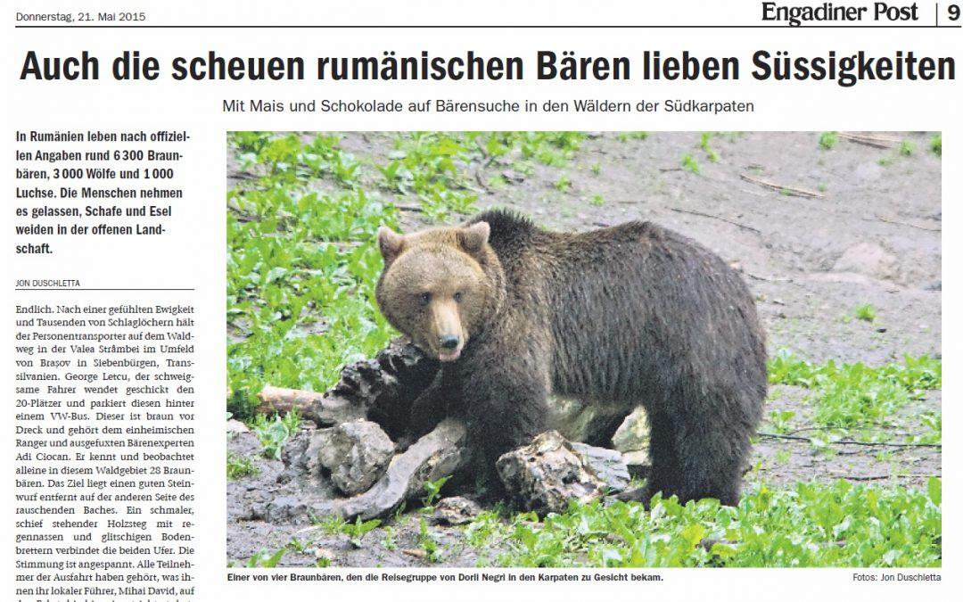 Auch die scheuen rumänischen Bären lieben Süssigkeiten