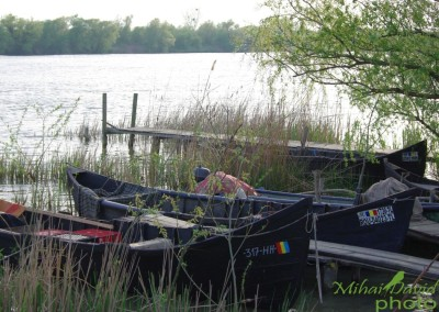 romanian-tours-danube-delta-wildlife-14