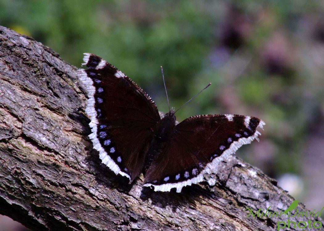 romanian-wildlife-tours-carpathians-danube-delta-transylvania-dobrogea-19