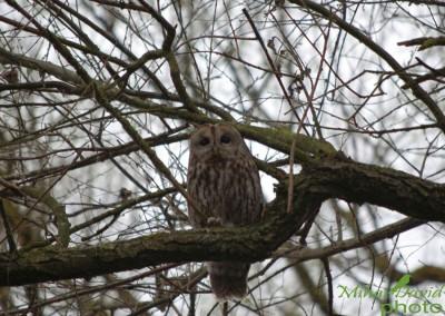 romania-birdwatching-tours-danube-delta-carpathians-transylvania-17