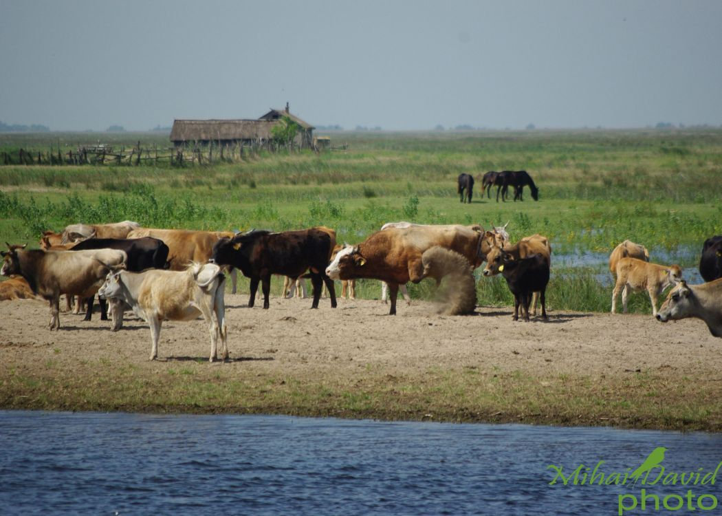 romanian-tours-danube-delta-wildlife-110