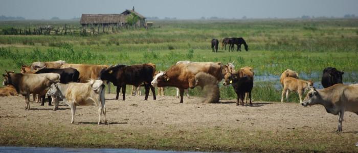 letea-village-danube-delta-rural-tour