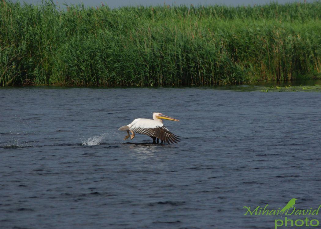 romanian-tours-danube-delta-wildlife-12