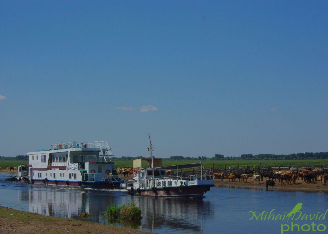 romanian-tours-danube-delta-wildlife-10