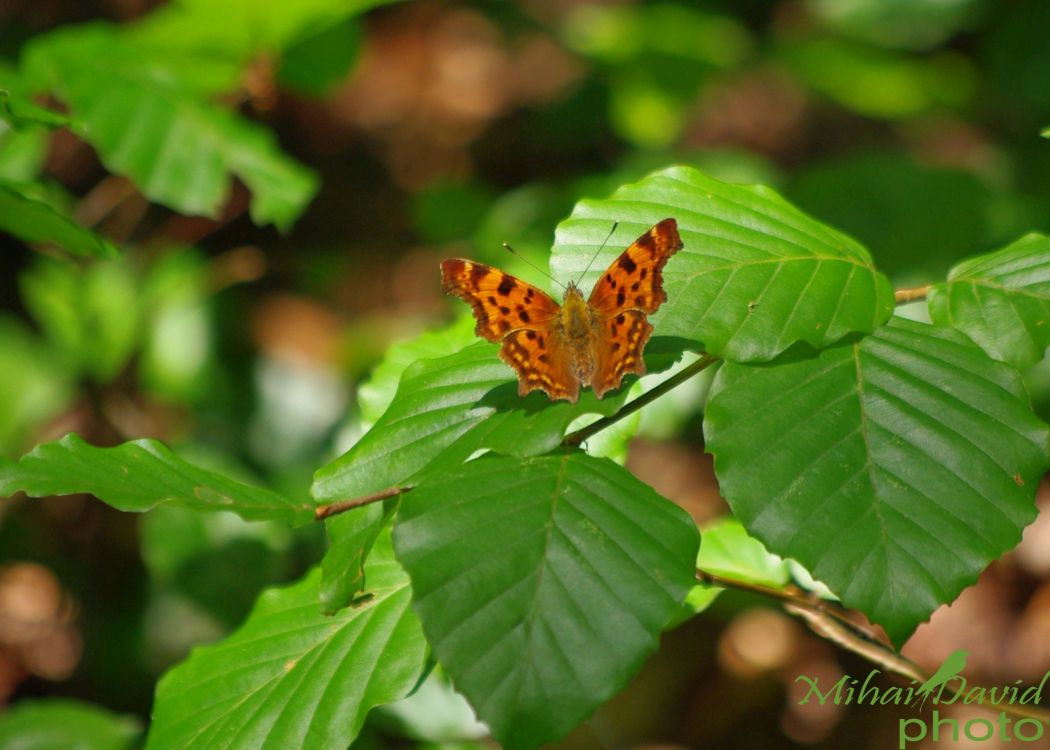 pix romanian-wildlife-tours-carpathians-danube-delta-transylvania-dobrogea-17