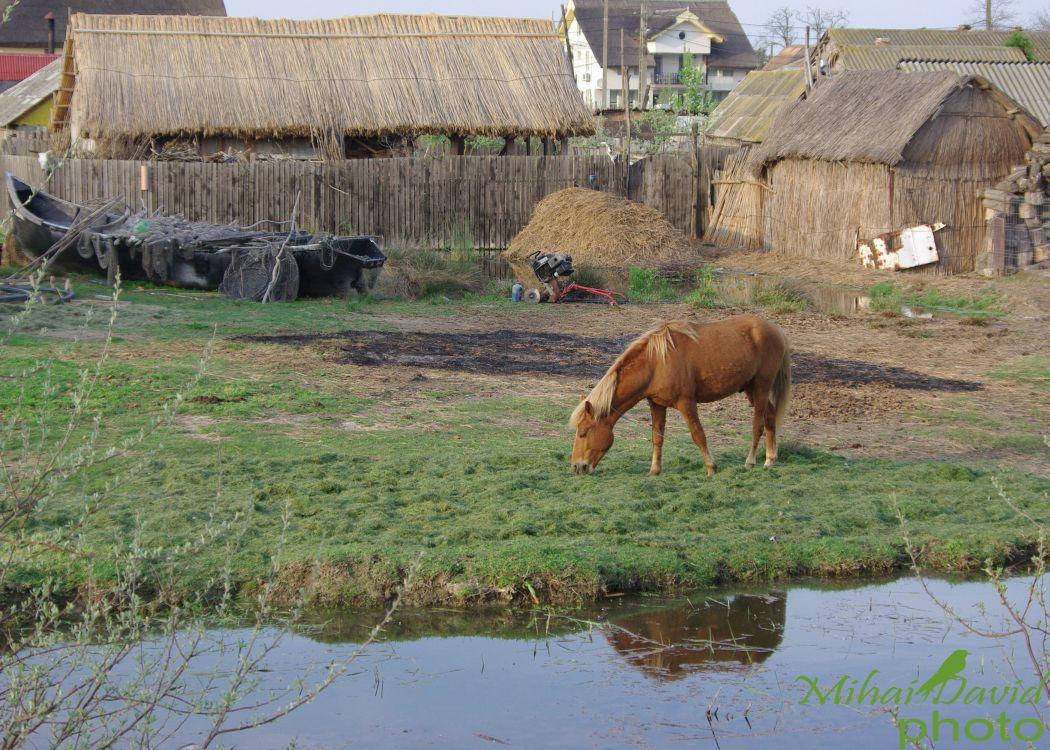 romanian-tours-danube-delta-wildlife-8
