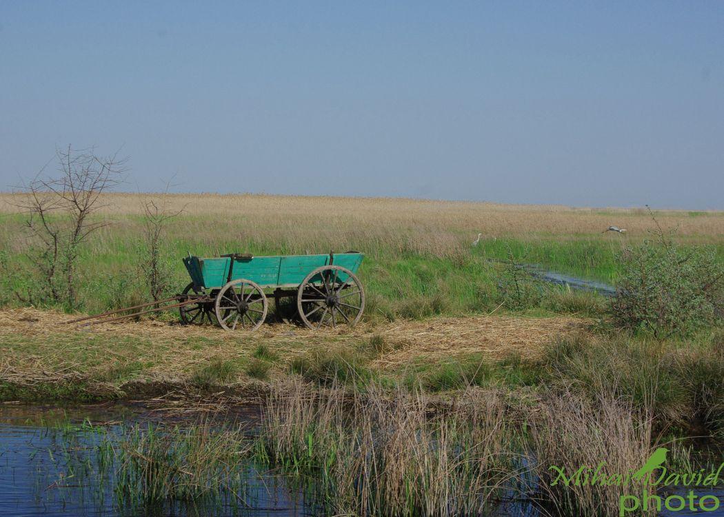 romanian-tours-danube-delta-wildlife-6