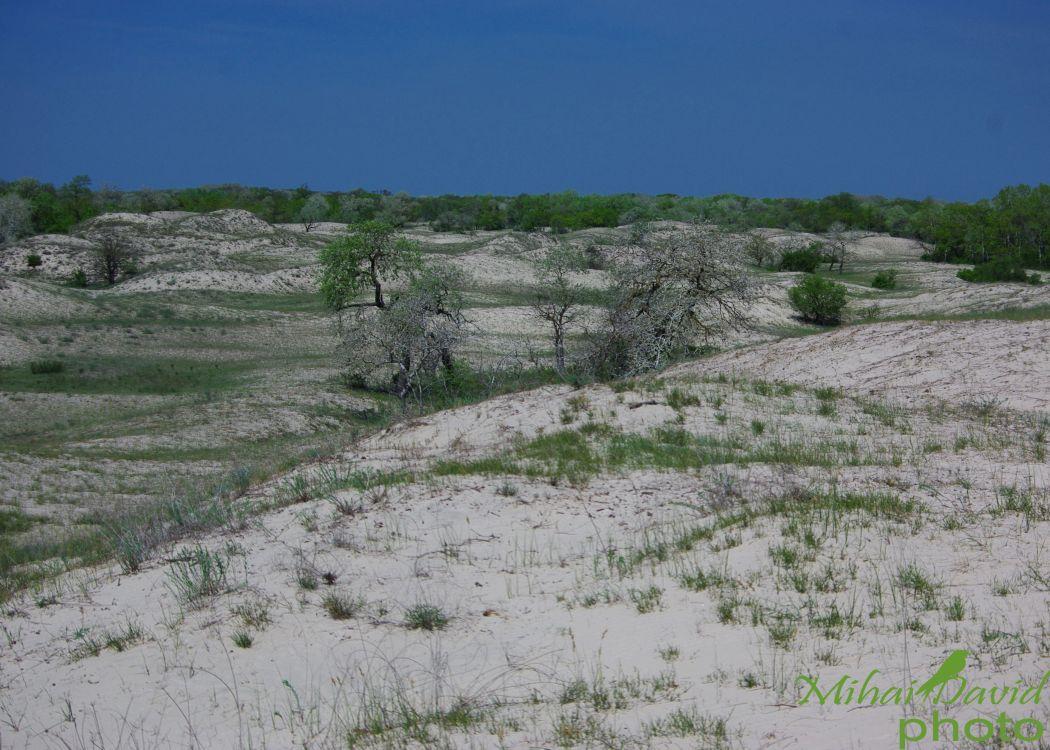 romanian-tours-danube-delta-wildlife-4
