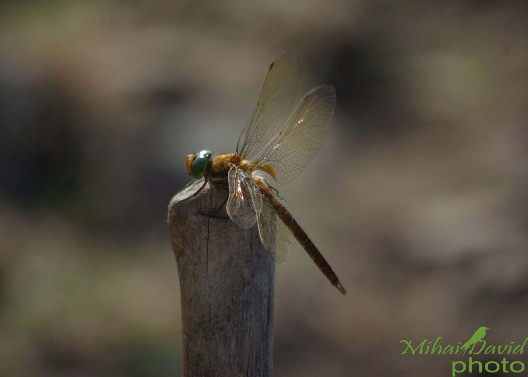 romanian-wildlife-tours-carpathians-danube-delta-transylvania-dobrogea-15