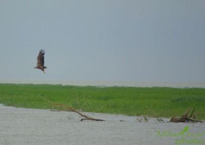 romanian-tours-danube-delta-wildlife-3