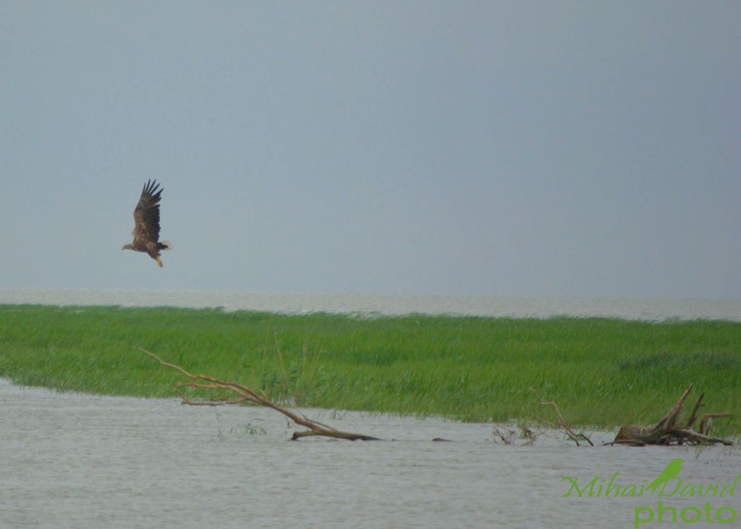 romanian-tours-danube-delta-wildlife-3