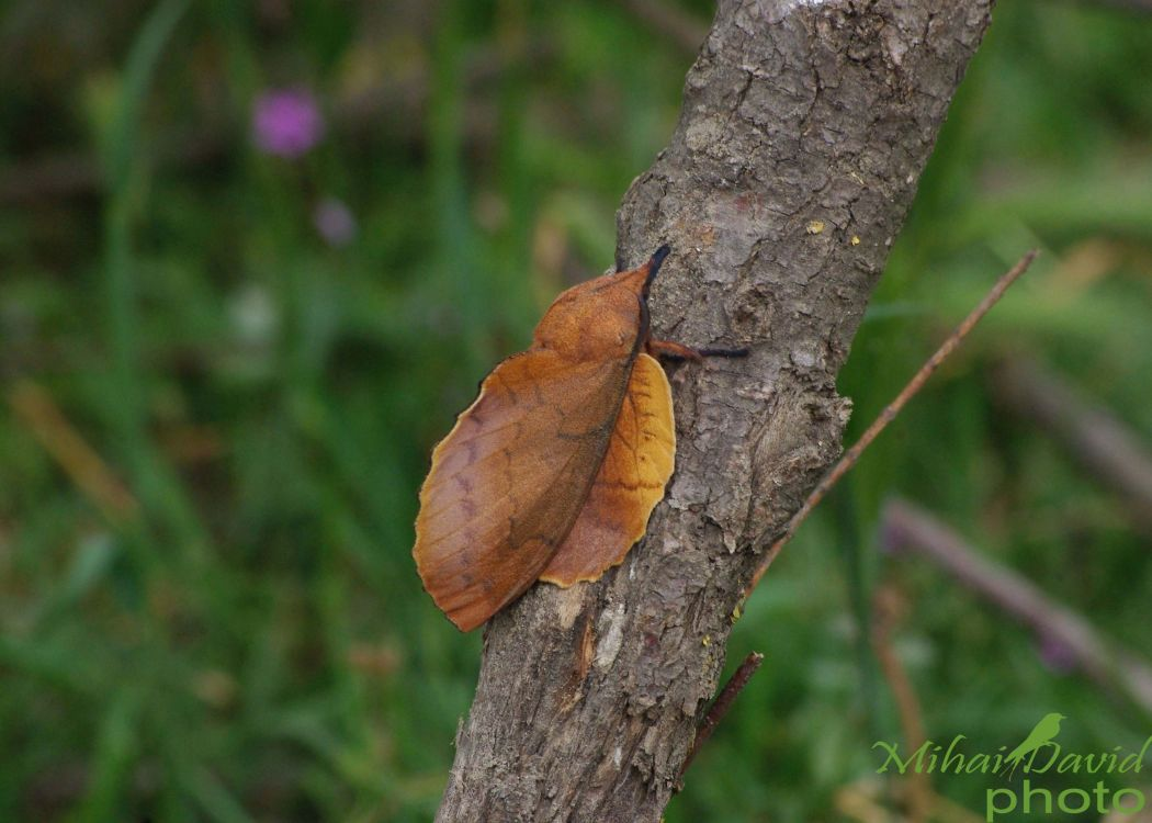 romanian-wildlife-tours-carpathians-danube-delta-transylvania-dobrogea-13