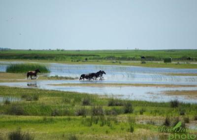 romanian-tours-danube-delta-wildlife-2