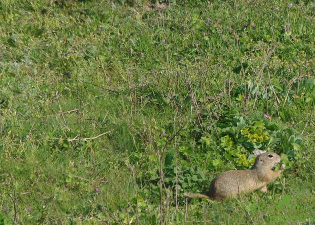 romanian-wildlife-tours-carpathians-danube-delta-transylvania-dobrogea-11