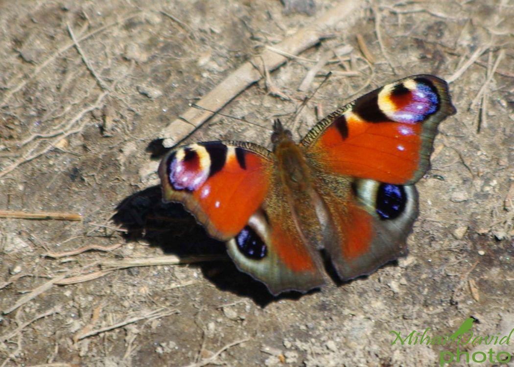 romanian-wildlife-tours-carpathians-danube-delta-transylvania-dobrogea-10