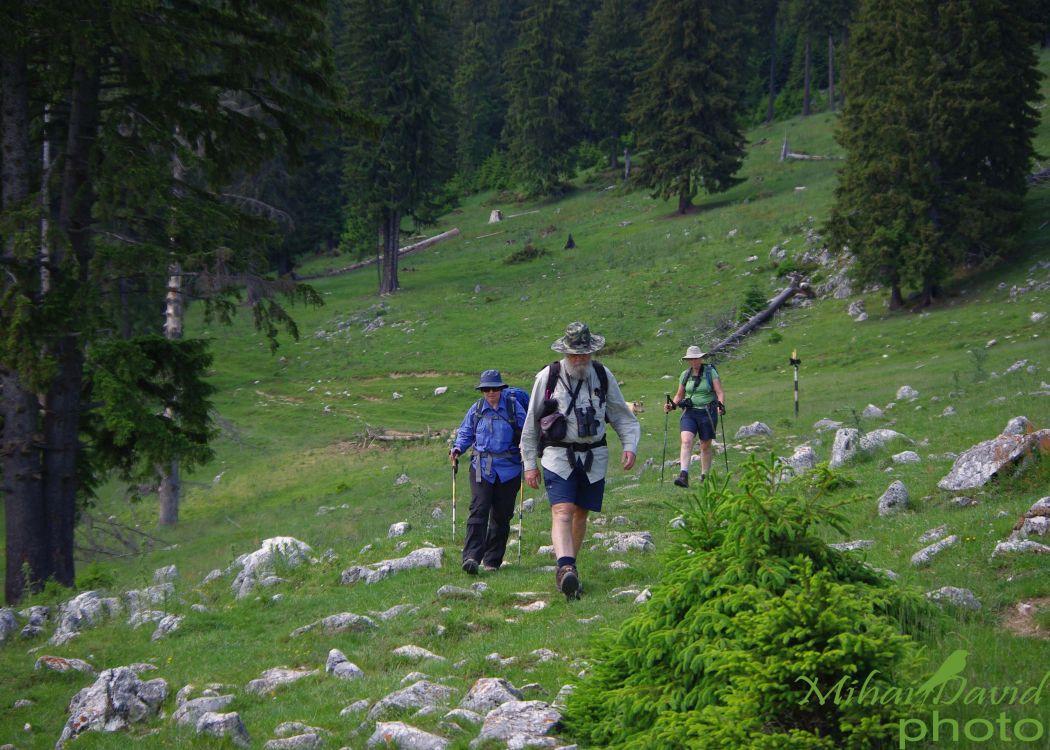 hiking-transylvania-carpathians-tours-3