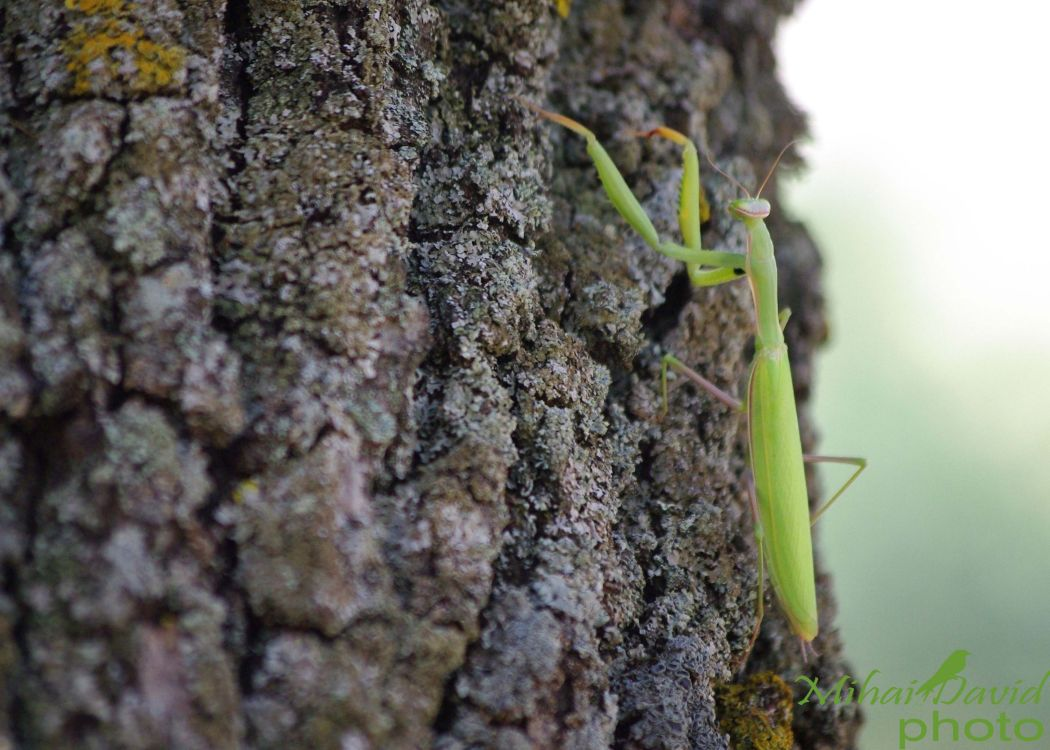 romanian-wildlife-tours-carpathians-danube-delta-transylvania-dobrogea-7
