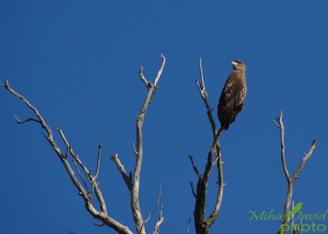 romania-birdwatching-tours-danube-delta-carpathians-transylvania-24