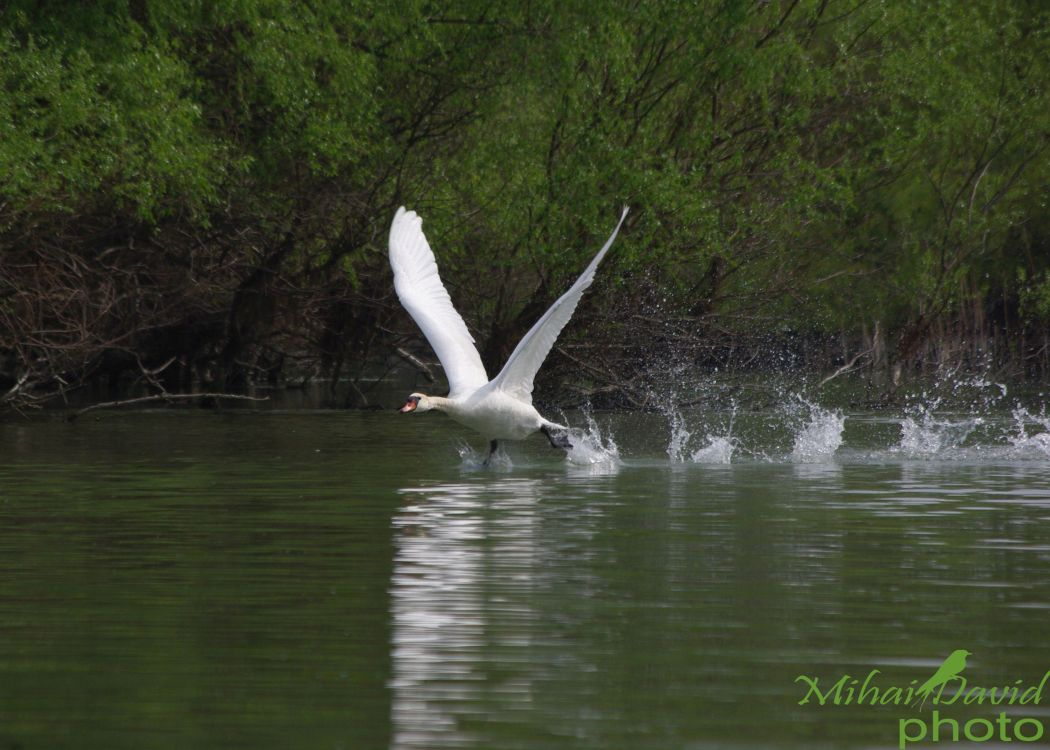 romanian-tours-danube-delta-wildlife-1
