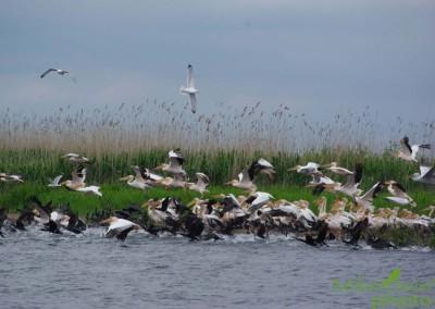 romania-birdwatching-tours-danube-delta-carpathians-transylvania-2