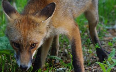 Karpaten Wildtierbeobachtung – 4 Tage Tour