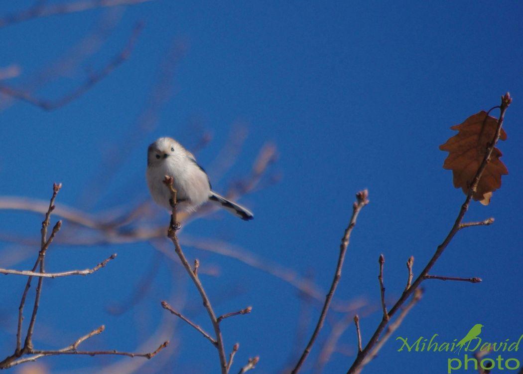 romania-birdwatching-tours-danube-delta-carpathians-transylvania