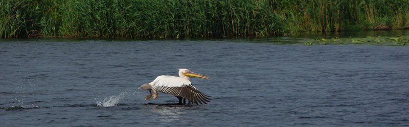 Birding and bearwatching: Danube Delta & the Carpathians 8 days tour