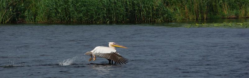 Bärenbeobachtung in den Karpaten  und Vogelbeobachtung im Donaudelta – 8 Tage