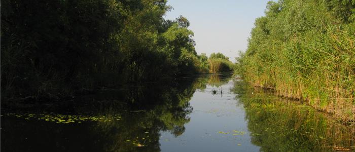 danube-delta-birdwatching-canoe-tour