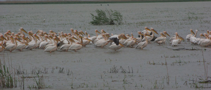 danube-delta-birdwatching-tours