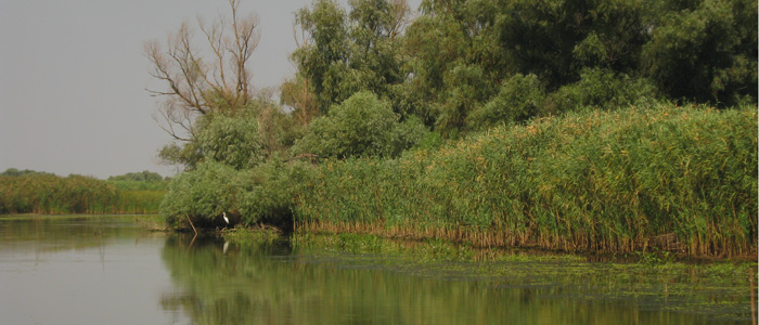 danube-delta-canoe-birdwatching-active-tour