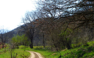 "Radeln auf dem ""Mocanita"" Radweg (Harbach Tal)"