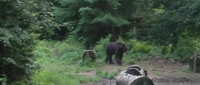 Carpathian Wildlife