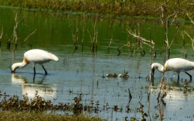 Spring in the Danube Delta – a true birdwatchers' paradise